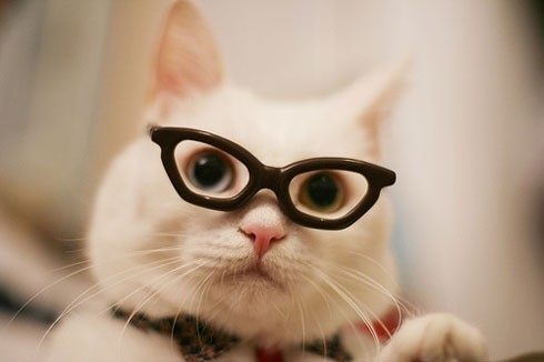 cat-in-tiny-glasses